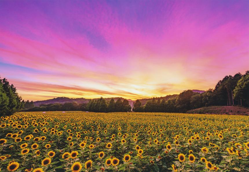 自然 日本 写真 コンテスト の