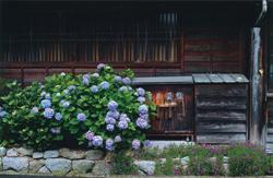 「旅の癒し」古谷 徹(長野県)