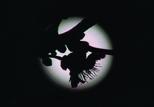 「月夜の梅見」藤定早苗(茨城県)