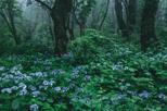 「森に咲く」青木リツ(広島県)