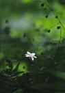 「森の妖精」佐藤教子(神奈川県)
