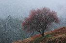 「春雪に耐えて」山口義文(岐阜県)