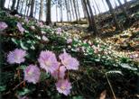 「山里の春」庄子一男(茨城県)