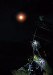 「月の精」黒川良夫(千葉県)