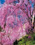 「春盛り」竹内正義(東京都)