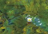「水中の宝石」黒住洋子(岡山県)