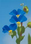 「野の花」東 義夫(宮崎県)