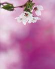 「春色の午後」高野好史(静岡県)