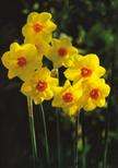 「花の合唱」佐藤 美那子(千葉県)