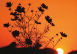 「夕陽を受けて」近藤芳子(千葉県)