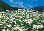 「初夏の訪れ」池田 豊(長野県)