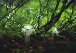 「森の妖精」野崎洋子(新潟県)