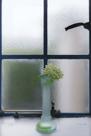 「人生に写真を、窓辺には花を」二見匡彦(東京都)