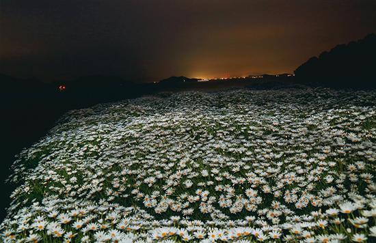 「白いじゅうたんの丘」谷口 八十美(高知県)
