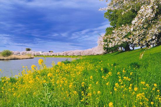 「晴れた春の日に」代永将司(埼玉県)