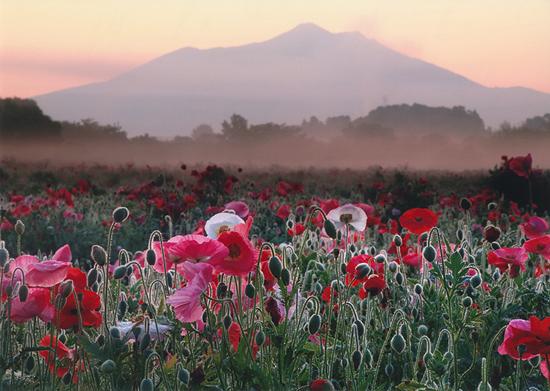 「朝もやにつつまれて」溝田一夫(千葉県)