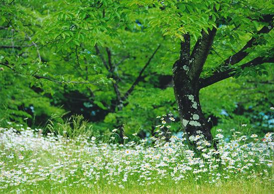 「春風にそよぐ」真栄城 相子(沖縄県)