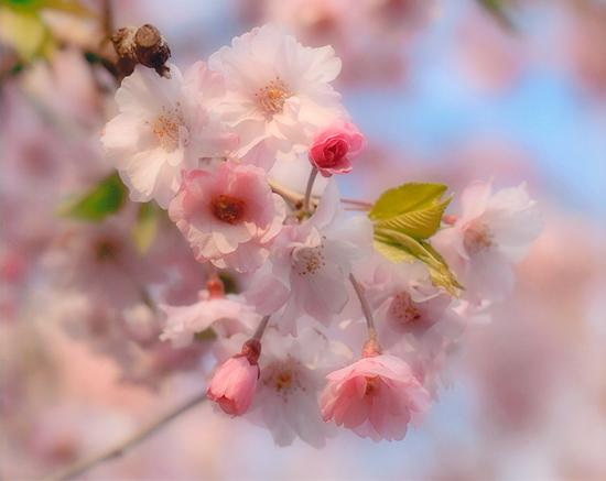 「花飾り」竹内正義(東京都)