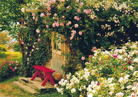 「バラに囲まれて」桑沢浩一(長野県)