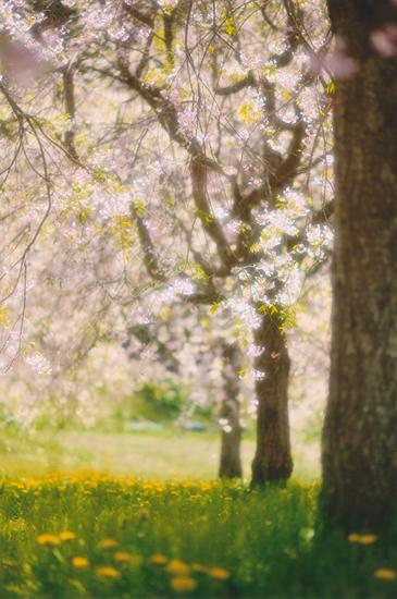 「春の光」清水清一(長野県)