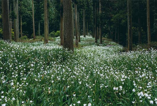 「白い絨毯」重村哲雄(山口県)