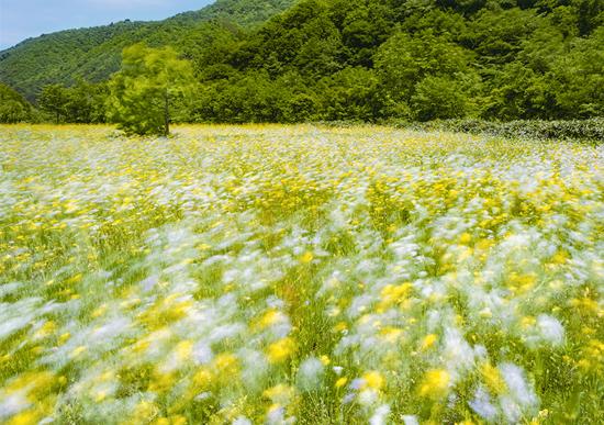 「野花たちの歌」浅野 良(福島県)