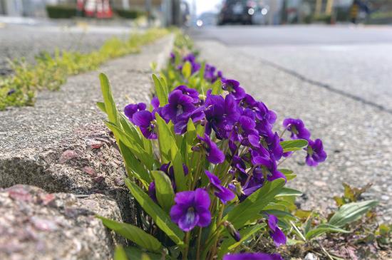 「道ばたから花束を」松比良 真岐子(兵庫県)