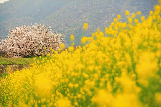 「里の春」増田邦彦(香川県)