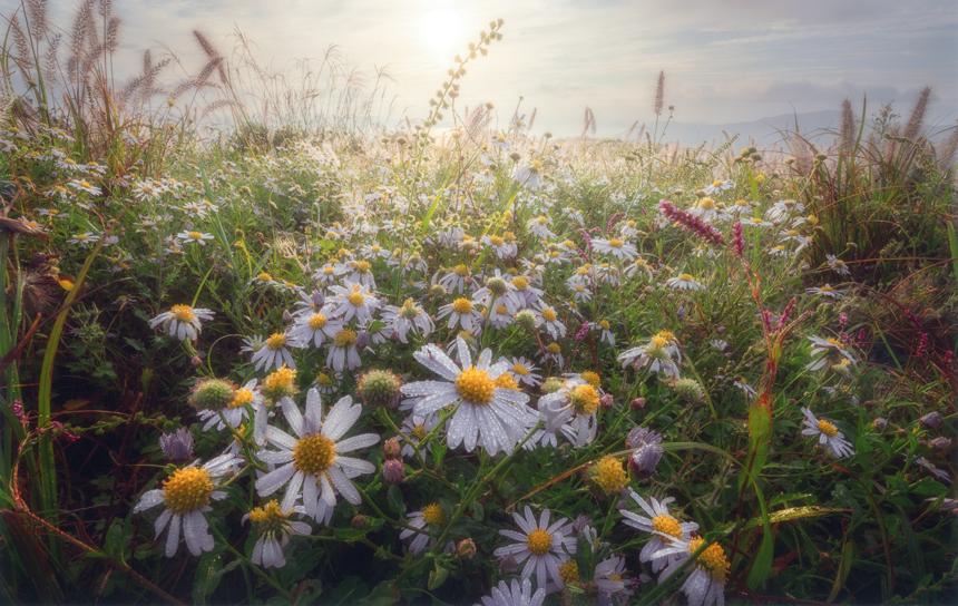 花・植物コース特選