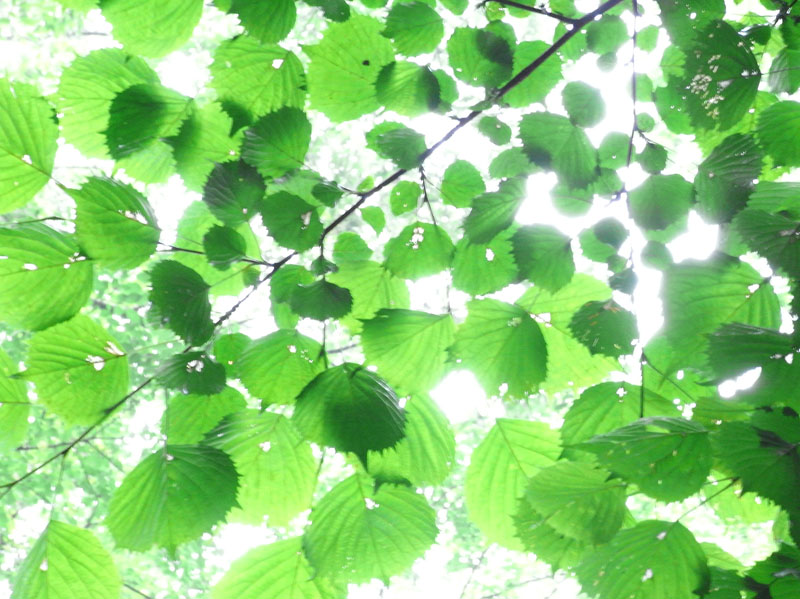緑を撮る│フォトレッスン|カメ...